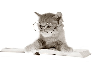 cat with glasses reading opened book