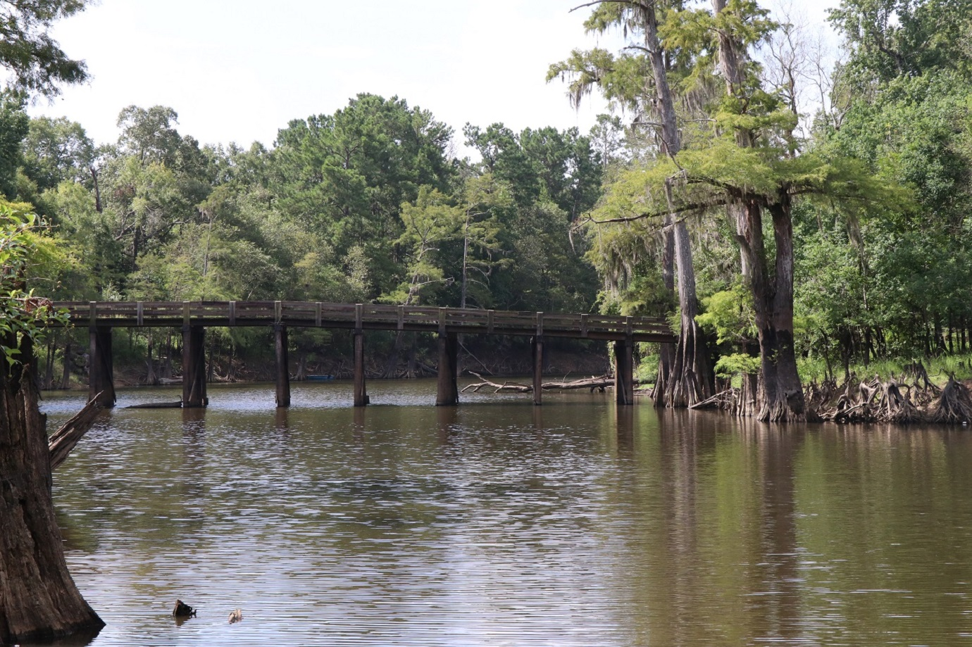 Alligator Park Bridge
