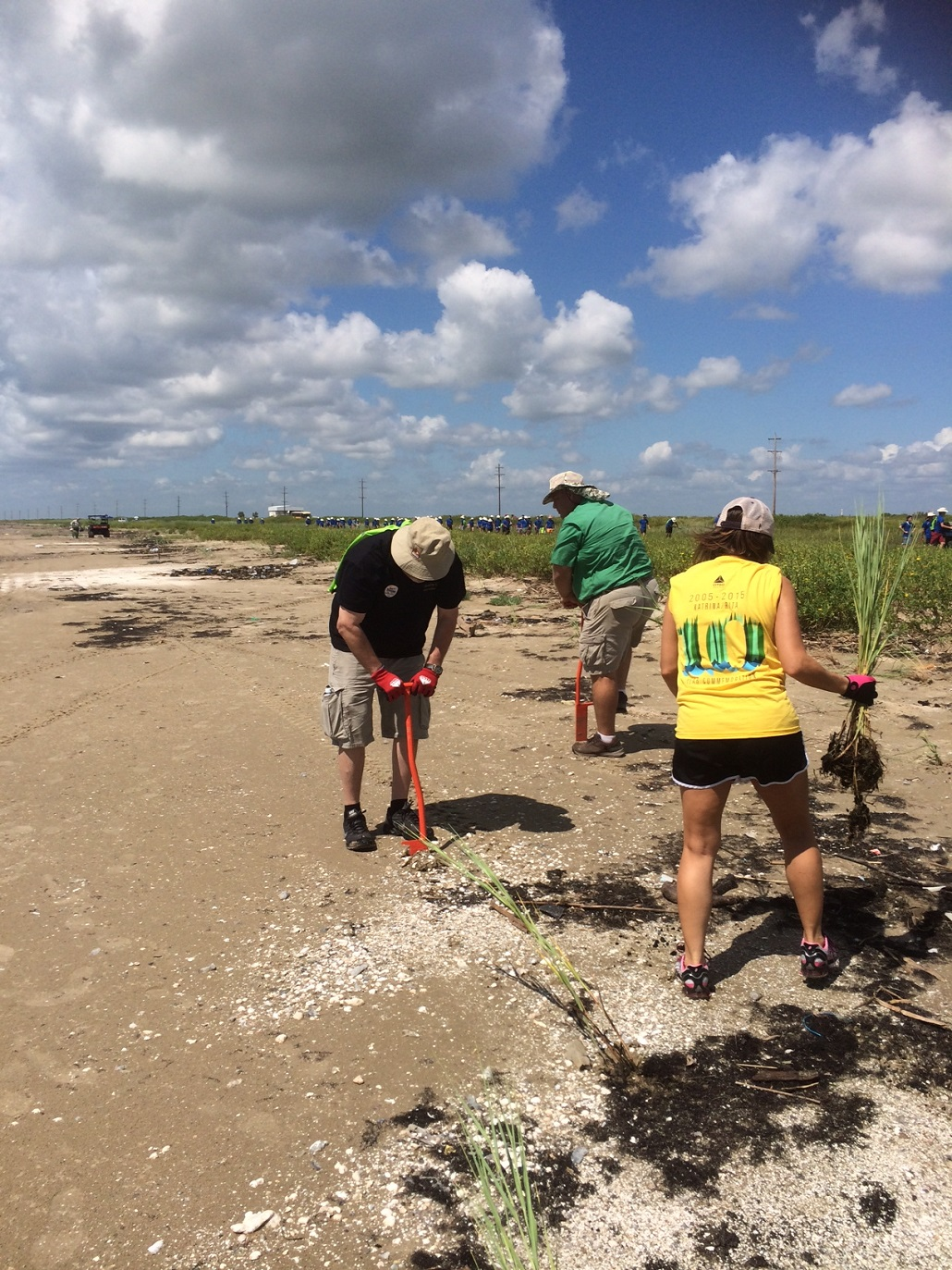 volunteers planting beach grass